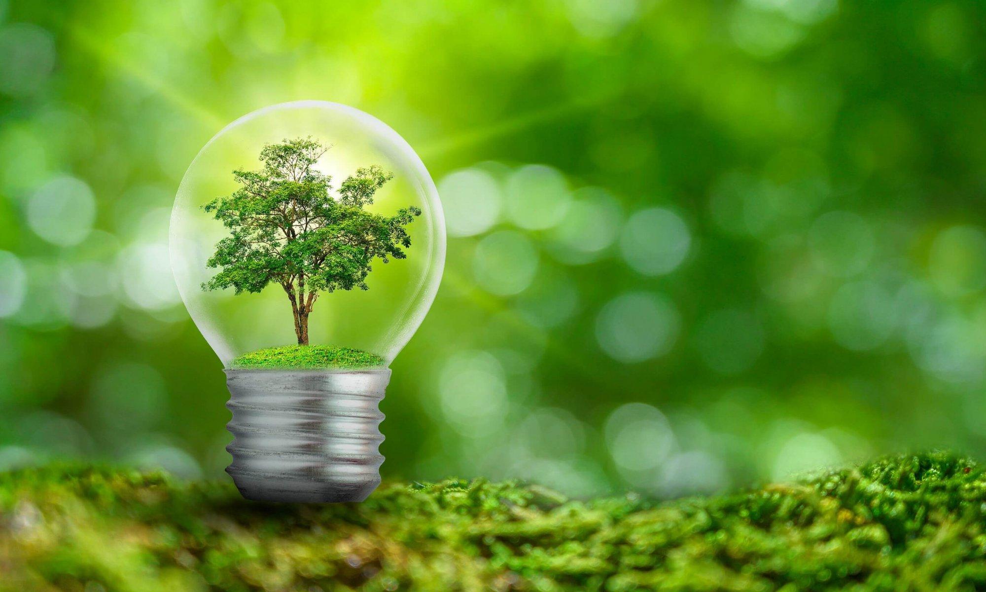 Glühbirne mit Baum vor grünem Hintergrund